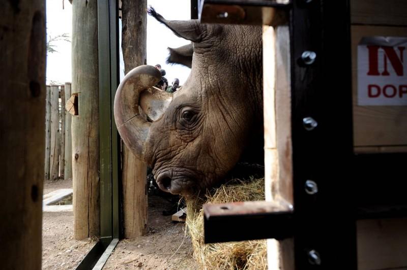 Возвращение носорогов