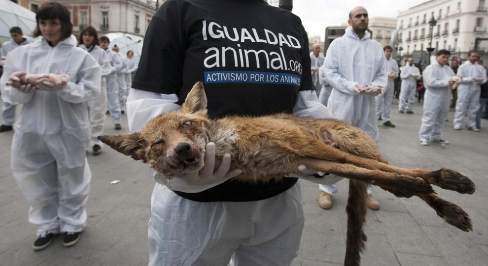 animal activist groups - 990×541