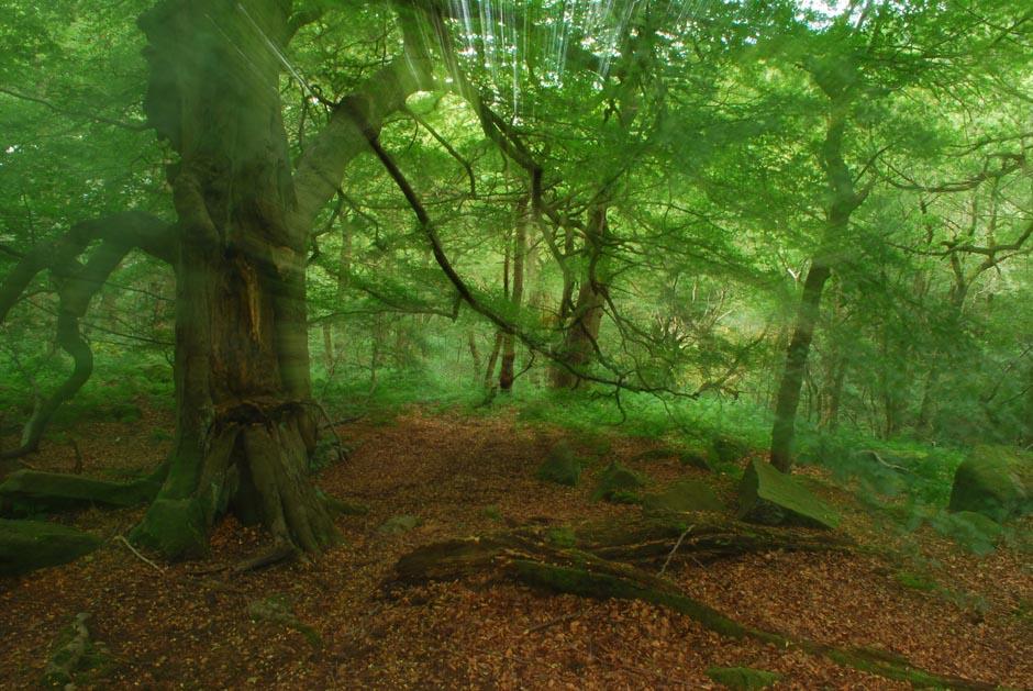 """7) В теме """"Деревья"""" победил Stephen Thaw с мягкой и нежной зеленью в Padley ущелье. Красоту кадра обеспечивает луч света скользящий сквозь листву."""