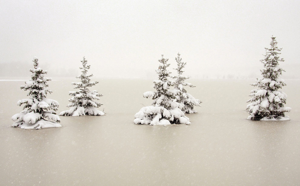9. Покрытые снегом сосны в паводковых водах 31 марта 2009 года в Moorhead, штат Миннесота. Из-за сильных метелей была затруднена работа спасателей. А в это время жители города Moorhead и близлежащего Фарго, штат Сев.Дакота пытаются вернуться в свои дома по мере того, как уровень реки Ред Ривер постепенно уменьшается. (Scott Olson/Getty Images)