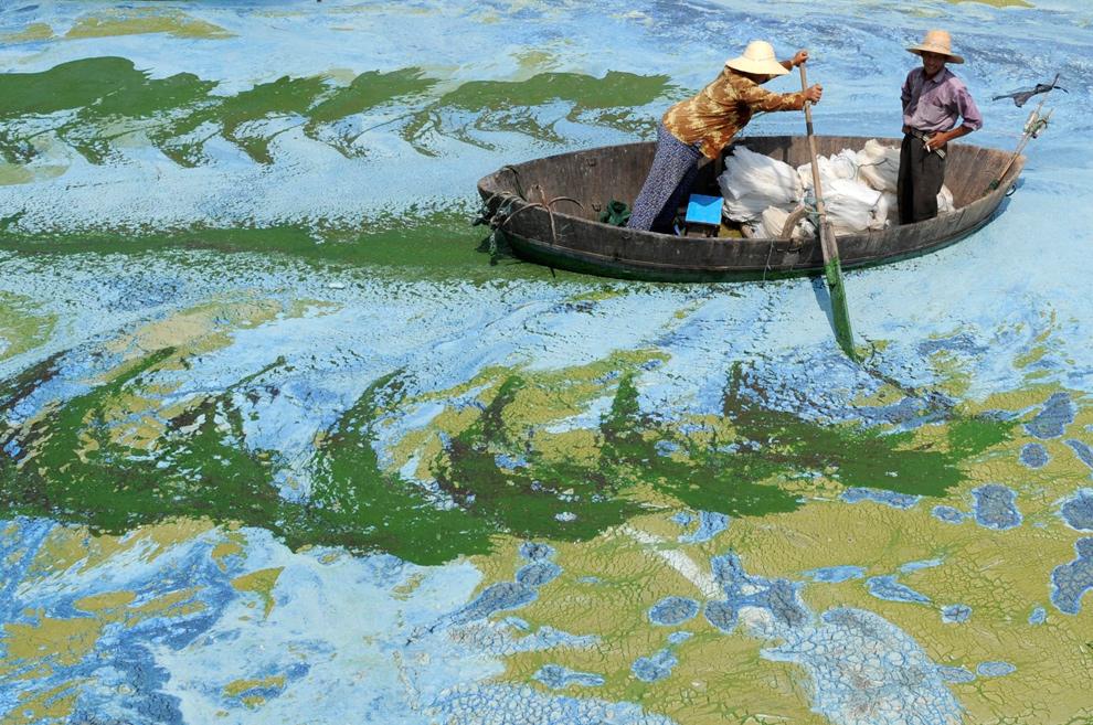 9. Рыбаки гребут в лодке по озеру Чаоху в Хэфэе, китайская провинция Аньхой, воды которого «зацвели», т.е. заполнились разросшимися одноклеточными водорослями, 19 июня 2009 года. Китай вложил 51 миллиард юаней (7,4 миллиардов долларов) в создание 2712 проектов, целью которых является очищение восьми рек и озер в 2009 году. (REUTERS/Jianan Yu)