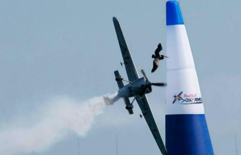 7) Птица летит впереди австрийского экспериментала Ханнеса Арка в ходе второго раунда Red Bull Air Race чемпионата мира в Сан-Диего в 2009 году… (REUTERS)