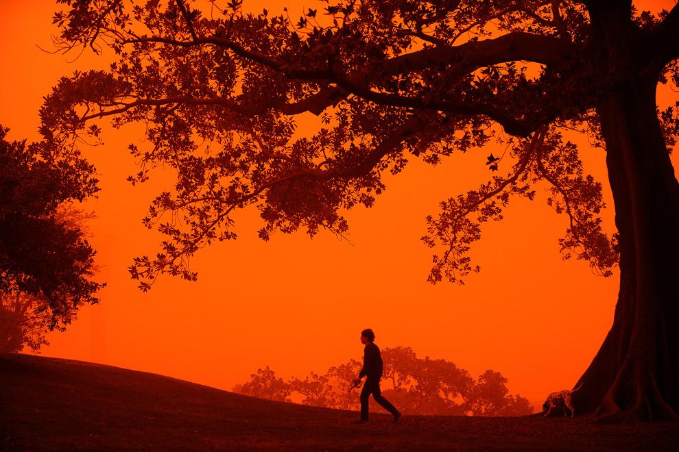 15. Молодой человек выгуливает собаку на холме Обсерватория недалеко от Сиднея 23 сентября 2009 года, когда крупнейший город Австралии был охвачен странным покровом из красной пыли. Автомобили и здания Сиднея стали оранжевыми, когда сильный ветер принес в город пыль, мешая жителям и вынуждая детей и пожилых людей оставаться дома. (GREG WOOD/AFP/Getty Images)