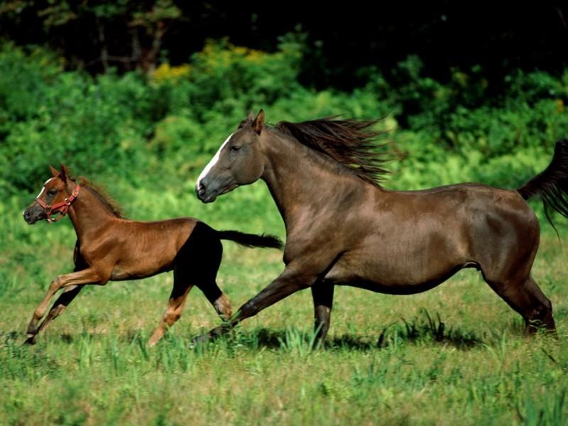 Грация лошади