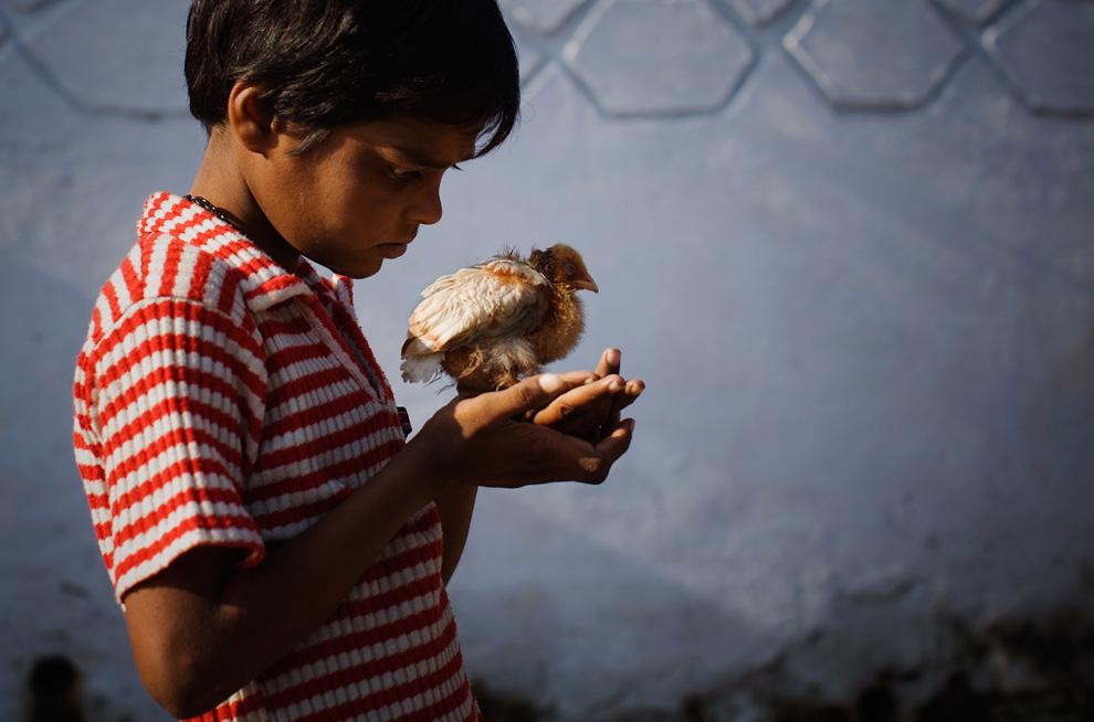 17. Умственно отсталый 10-летний Наваб Миан – жертва катастрофы 1984 года – играет с цыпленком недалеко от заброшенного завода «Union Carbide» 28 ноября 2009 года в Бхопале, Индия. (Daniel Berehulak/Getty Images)