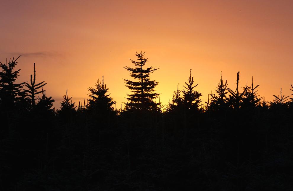 10. Солнце восходит за деревьями лесничества Дартмур 1 декабря 2009 года недалеко от Эшбертона, Англия. (Matt Cardy/Getty Images)