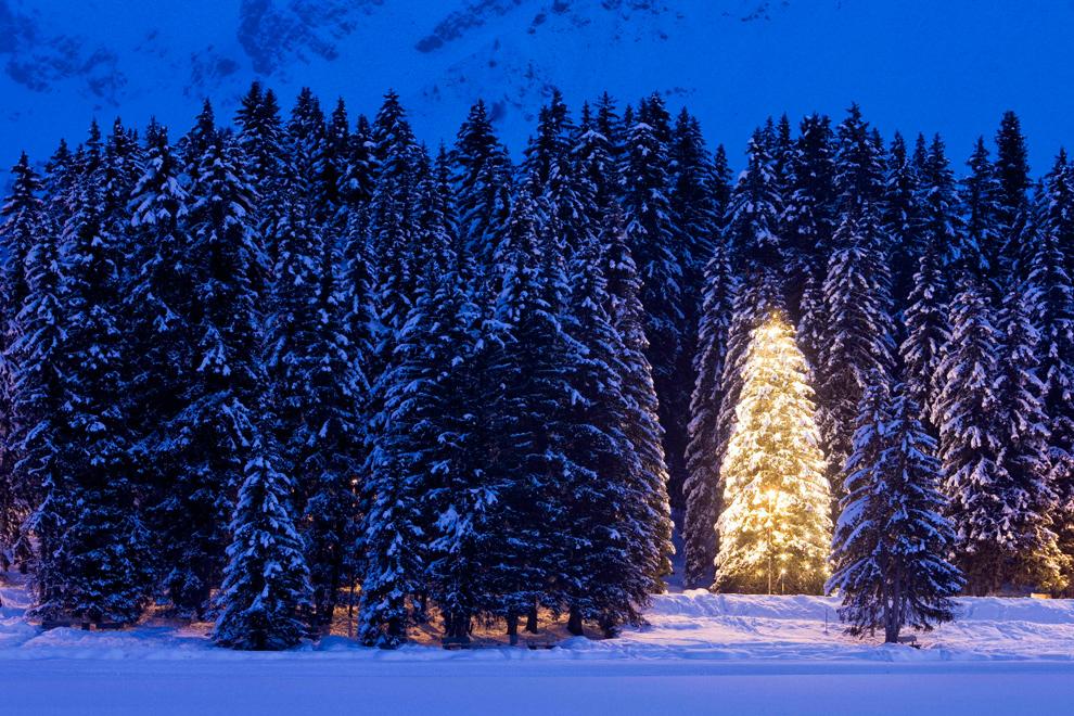 34. Елка в гирляндах светится в сумерках недалеко от Аросы, Швейцария, 17 декабря 2009 года. (AP Photo/Keystone, Alessandro Della Bella)