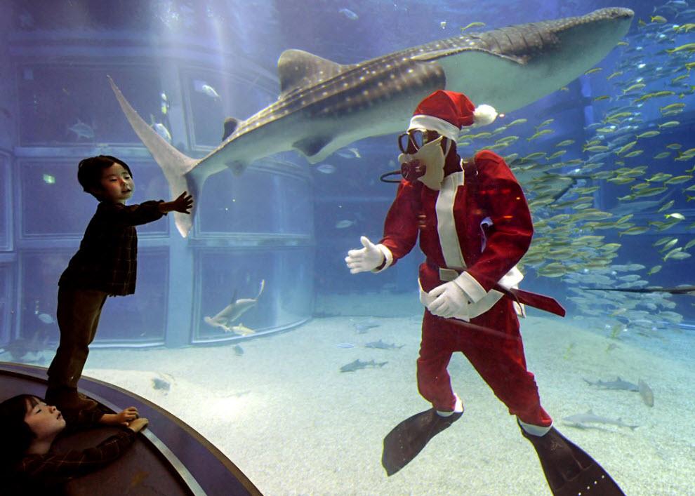 24. Дайвер в костюме Санта Клауса приветствует посетителей аквариума  Каюкане в Японии, 19 ноября. (Kazuhiro Nogi, AFP / Getty Images)