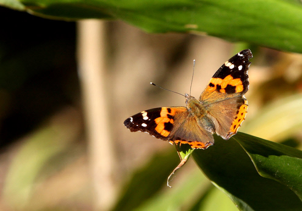 25. Бабочка в лесу недалеко от Катманду, Непал, 19 ноября. (Prakash Mathema, AFP / Getty Images)