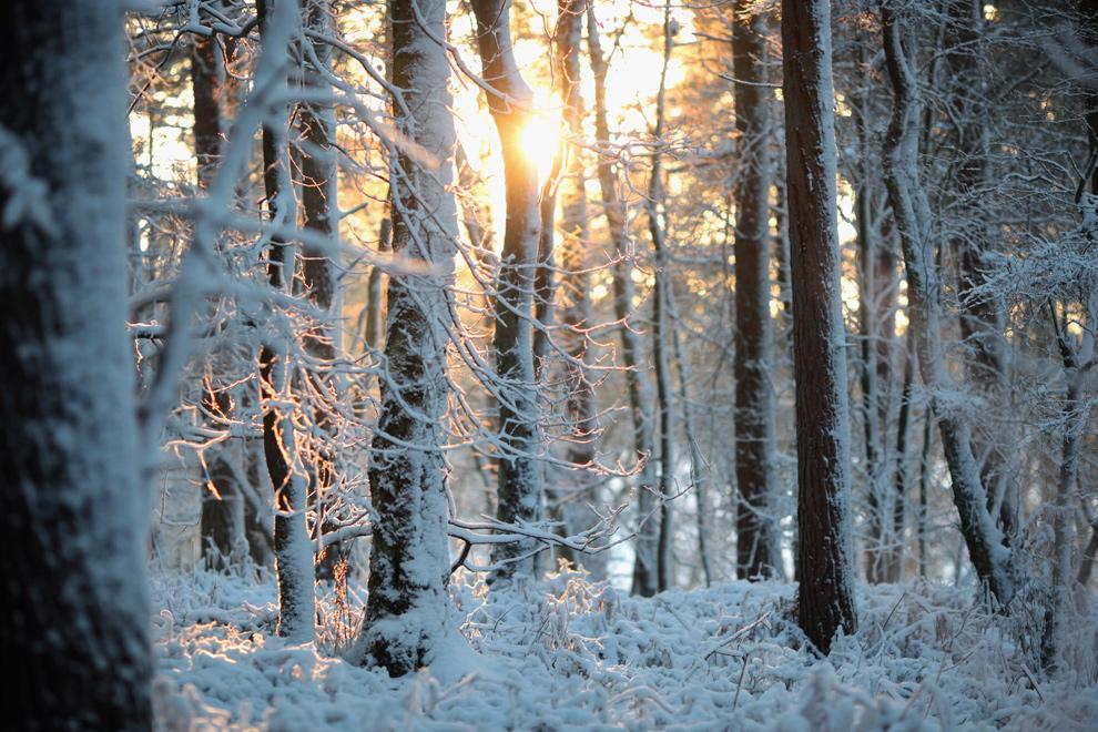 27. Снег лежит в лесу Национального парка недалеко от Колдхарбор, Англия, 18 декабря 2009 года. (Dan Kitwood/Getty Images)