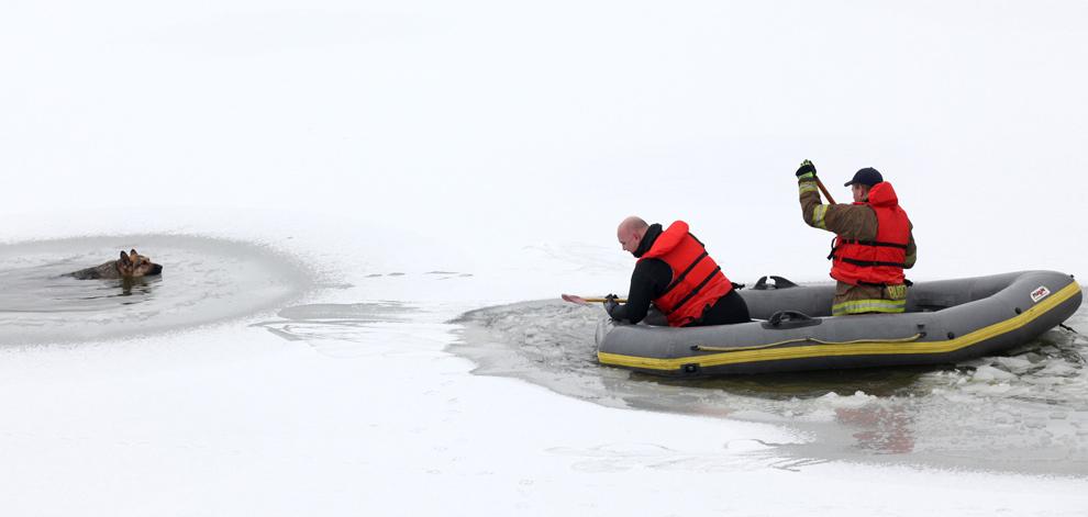 31. Пожарные спасают немецкую овчарку после того, как та провалилась под тонкий лед в водоеме Prairie Creek в Манси, штат Индиана. По словам спасателей, собака провела в воде около часа. Пожарным удалось пробить лед, и собака выплыла на берег. (AP Photo/ The Star Press, Chris Bergin)