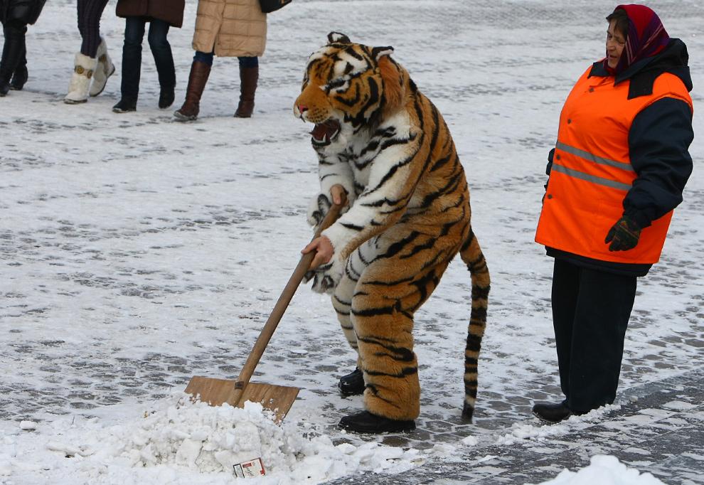 40. Помощник уличного фотографа в костюме тигра – знака 2010 года по китайскому календарю – помогает рабочей расчищать снег, что бы согреться, на площади Независимости в Киеве 22 декабря 2009 года. (NATALIYA SLIPCHUK/AFP/Getty Images)
