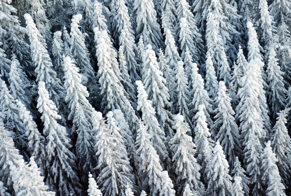 """41. Вид на покрытый снегом лес в южном лыжном регионе Германии Гармиш-Партенкирхен был сделан с нового горнолыжного подъемника """"Kandahar-Express"""" 18 декабря 2009 года. (STEFFI LOOS/AFP/Getty Images)"""