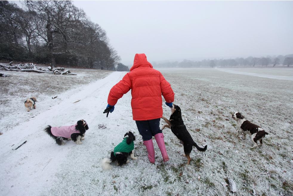 3. Женщина выгуливает собак по снегу в Ричмонд-парке 16 декабря в Лондоне. (Getty Images/Dan Kitwood)