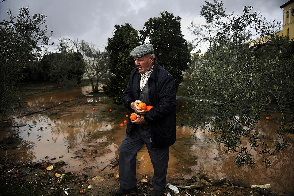 10. Мужчина собирает упавшие апельсины в городе Боллуллос де ла Митасьон, Испания. (Cristina Quicler/Agence France-Presse/Getty Images)