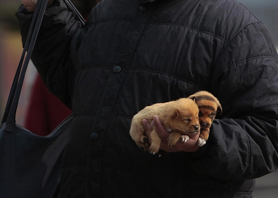 15) Человек продает щенков, на одном из которых нарисованы тигриные полоски, в Наньцзине, китайская провинция Цзянсу. Согласно китайскому лунному календарю Год Тигра начинается 14 февраля. (Sean Yong/Reuters)