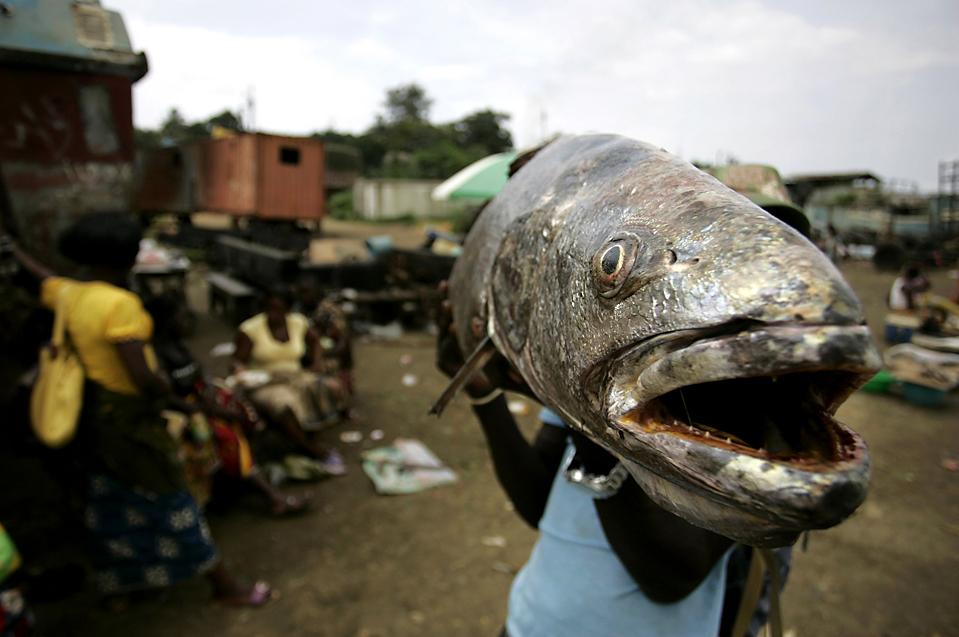 3. Рыбак несет огромную рыбу на пляже в Кабинде, Ангола. (Rafael Marchante/Reuters)