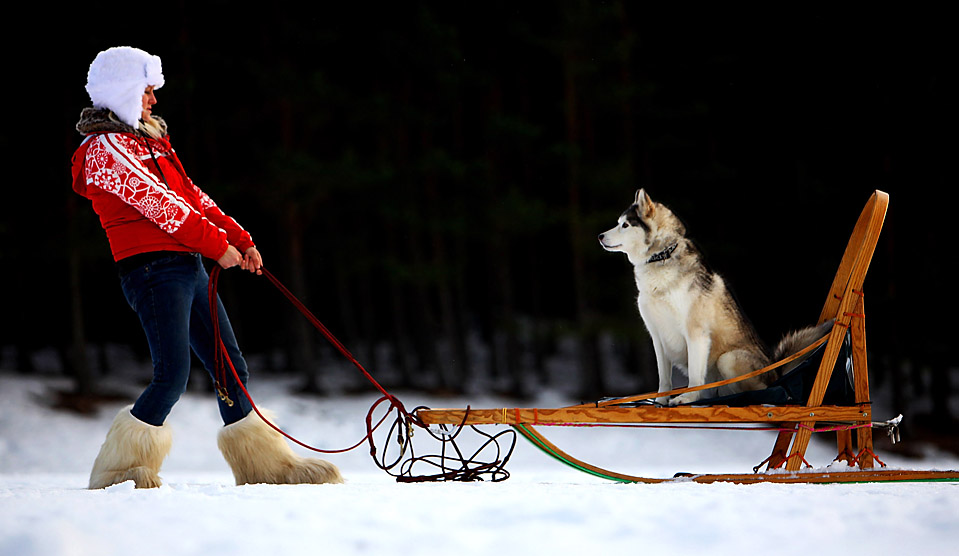 15. Лиса Куртин готовится к 27-ой ежегодной гонке на собачьих упряжках в Авиеморе, Шотлантия. В событии приняли участие более 1000 собак. (Jeff J. Mitchell/Getty Images)