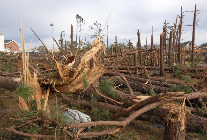 7) Деревья в сосновом бору свалены и вырваны с корнем у школы в Энтерпрайз, штат Алабама 2 марта 2007 года после торнадо. В результате обвала крыши погибло семь школьников. (UPI Photo/John Dickerson)