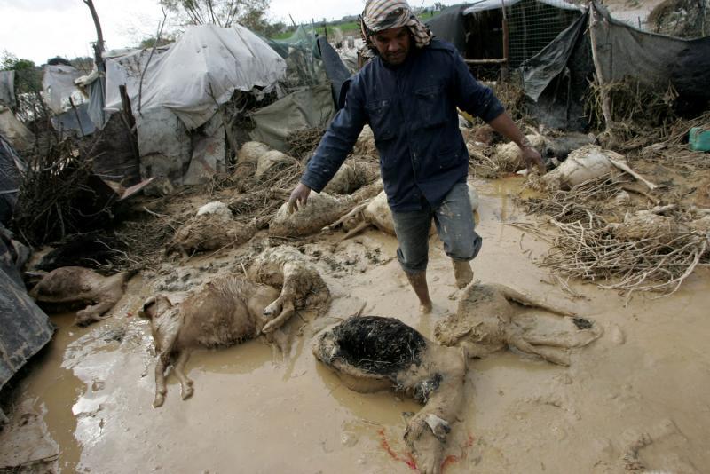 9) Палестинец проверяет мертвых овец в затопленном районе в центре Сектора Газа после сильных ливней 19 января 2010 года. Вышедшая из берегов вода затопила около 40 домов в Вади Газа – сельской местности Сектора Газа, в которой в основном проживают бедуины. (UPI/Ismael Mohamad)