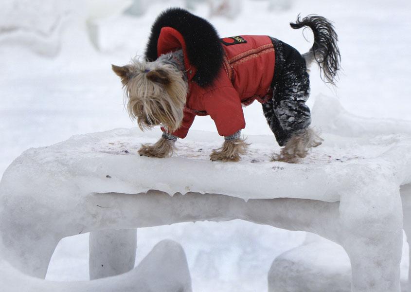 9) Собачка стоит на скульптуре из снега в минском парке после снегопада. (AP Photo/Sergei Grits)