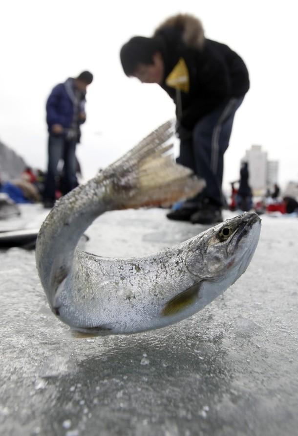 7) Река Хвачеонганг обычно замерзает на зиму, но если этого не случилось - никакой проблемы нет. (REUTERS/Lee Jae-Won)