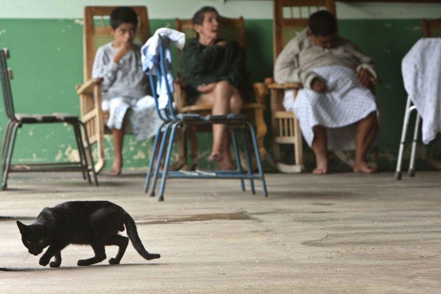 10. Кот идет по комнате отдыха для пациенток пожилого возраста в психиатрической клинике в Манагуа 15 октября 2008 года. (AP Photo/Esteban Felix)