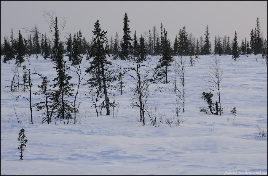 11) Сезонные леса.