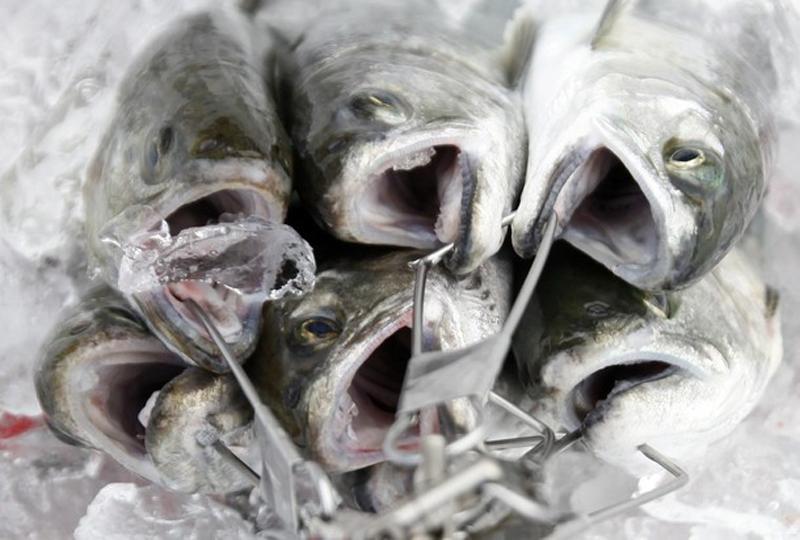 Фестиваль подледной рыбалки в Южной Корее