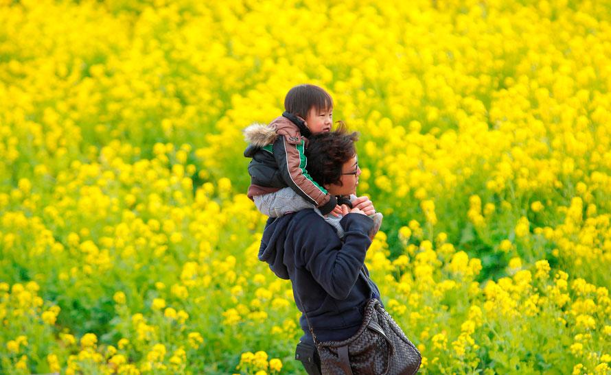 14) Синтаро Сакаи несет своего 3-летнего сына через поле цветов в парке Азумаяйаяма в префектуре Канагава, к западу от Токио. (AP Photo / Itsuo Inouye)