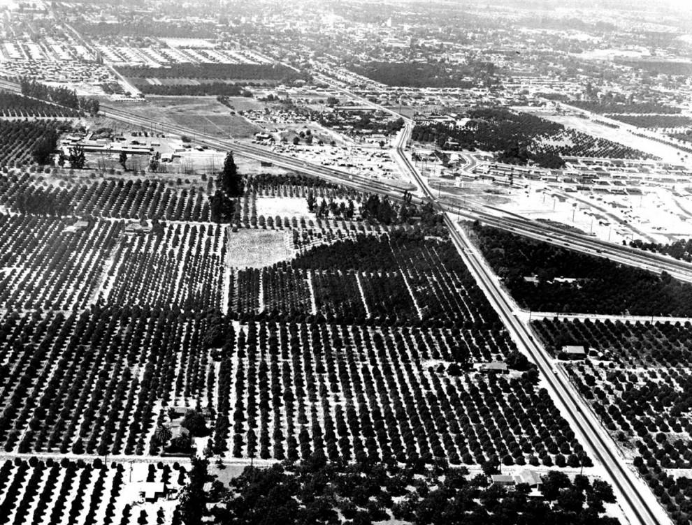 16) Уолт Дисней  приобрел 160 акров апельсиновых рощ у 17 разных владельцев в Анахайме, чтобы воплотить свою мечту: открыть парк, где родители и дети могли бы весело проводить время – вместе. (Disneyland)