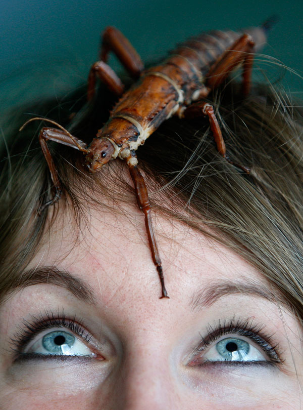 22. Смотритель зоопарка Лора Чайлдс, отвечающая за насекомых, смотрит на одно из них во время ежегодной переписи животных в Лондонском зоопарке. (AP Photo/Kirsty Wigglesworth)