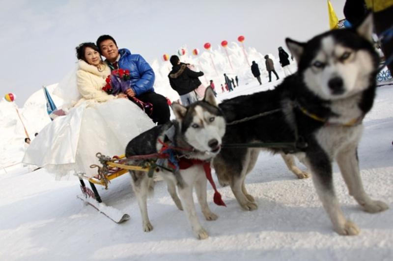 9) После торжественной части молодожены прокатились на собачьих упряжках. (REUTERS/Aly Song)