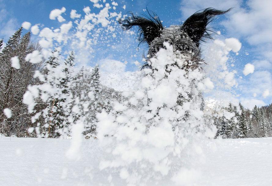 7) Собачка по кличке Лотта, которая представляет собой помесь нескольких пород, сидит в снегу в городке Ункен, расположенном в австрийской провинции Зальцбург. Метеорологи предсказывают, что в ближайшие дни в Австрии продолжатся снегопады. (AP Photo/Kerstin Joensson)