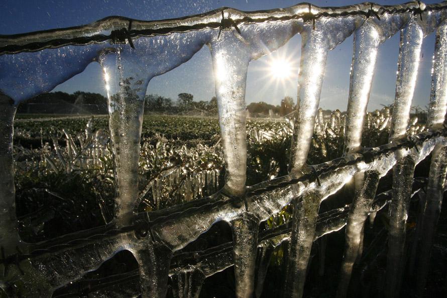 4) Лед на заборе, которым огорожено поле в Брендон Фармз.(SKIP O'ROURKE, Times)