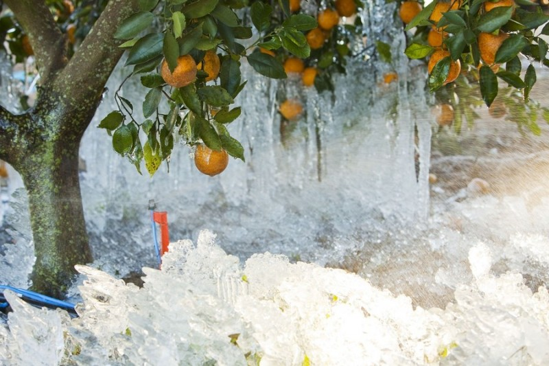 Морозы во Флориде