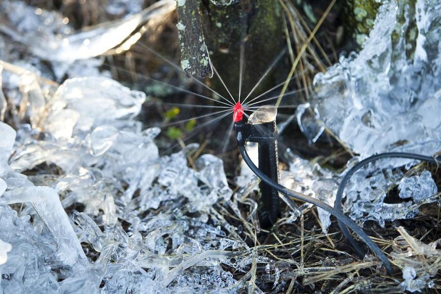 9) Многие фермеры включают разбрызгиватели, чтобы защитить растения от морозов.