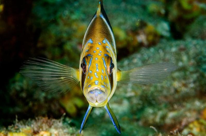 Мой кадр: жители водных глубин