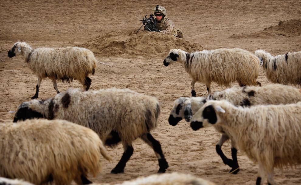 1) Младший капрал Джейм Хэррис из Мичигана из второго батальона охраняет позицию, мимо которой проходит отара овец, во время встречи морпехов, представителей местного правительства и жителей деревень в округе Гармсир провинции Гильменд 21 декабря 2009 года. (AP Photo/Kevin Frayer)