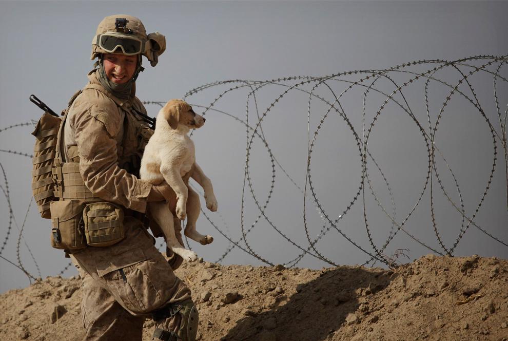 14) Морпех из 4-оо разведывательного полка держит щенка рядом с колючей проволокой на их базе в Кхан Нашине в провинции Гильменд 3 декабря 2009 года. (AP Photo/Kevin Frayer)