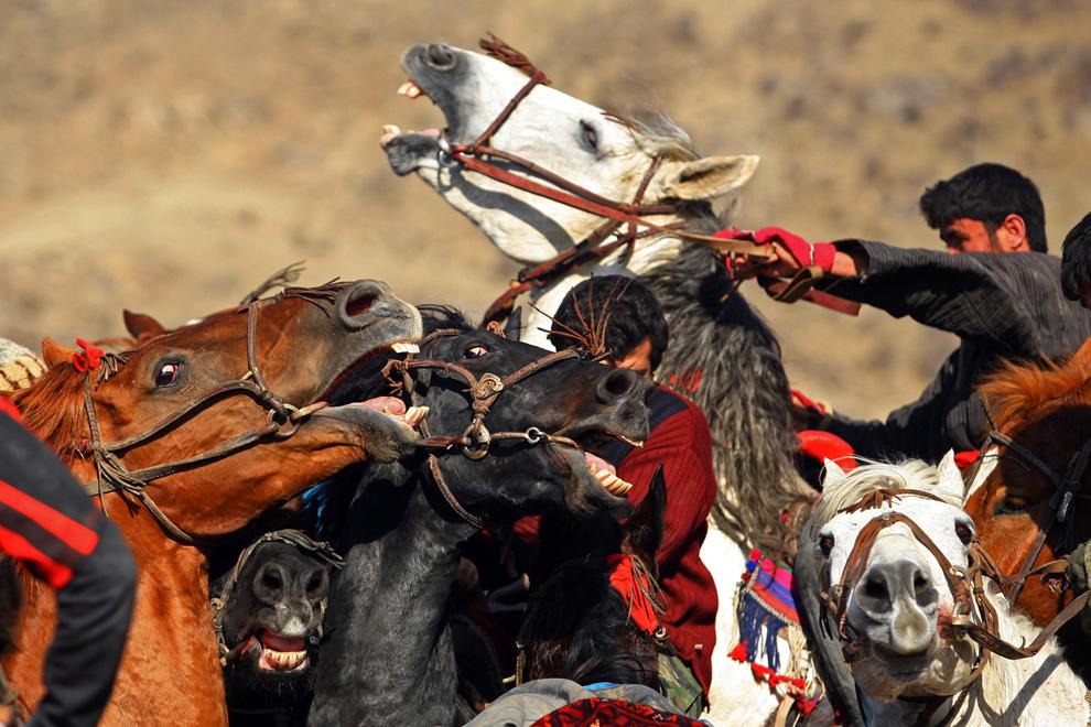 22) Афганские всадники играют в бузкаши 4 декабря 2009 года на окраине Кабула. Бузкаши (в переводе – «козлодрание») – национальный вид спорта в Афганистане. Цель игры – попытаться захватить тушу козла и отнести в определенное место для получения очка. Яростная игра может длиться иногда несколько дней. (Majid Saeedi/Getty Images)