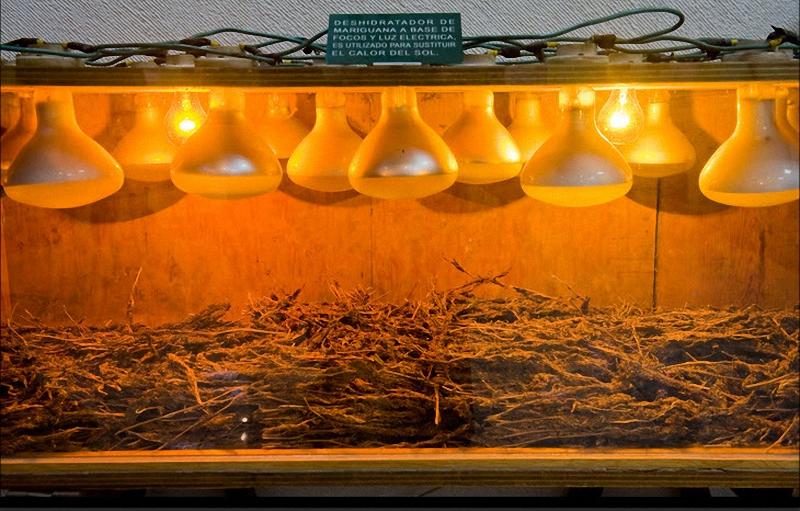 14. Прибор для сушки марихуаны в домашних условиях был найден во время полицейской облавы и теперь выставлен в музее. (Sarah L. Voisin-Washington Post)