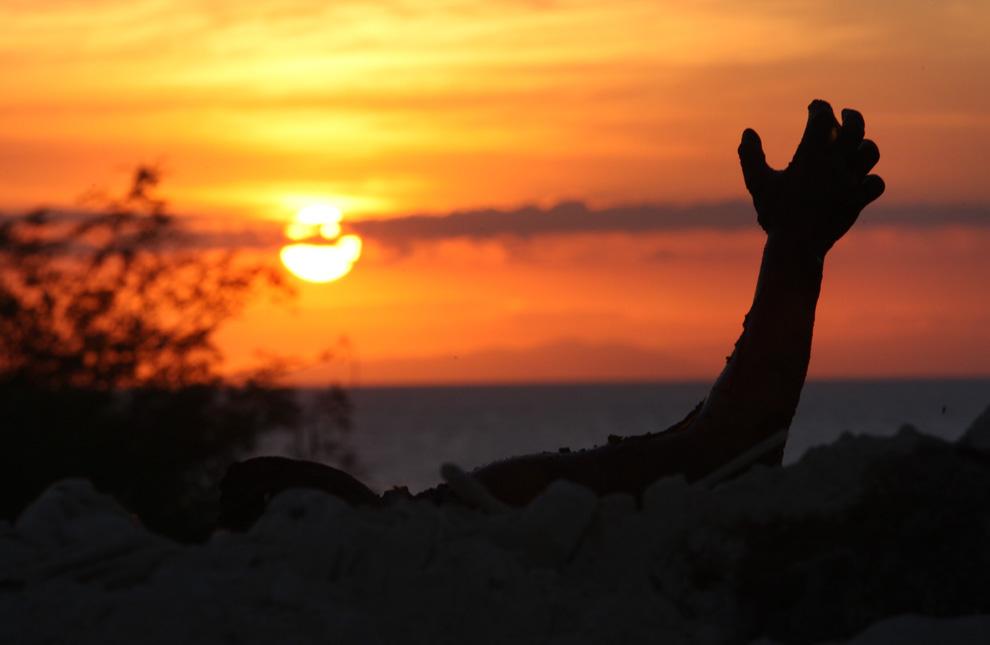 23. На окраине Порт-о-Пренс тела жертв землетрясения лежат кучами на обочинах дорог 15 января 2010 года. (Globe staff photo/Bill Greene)