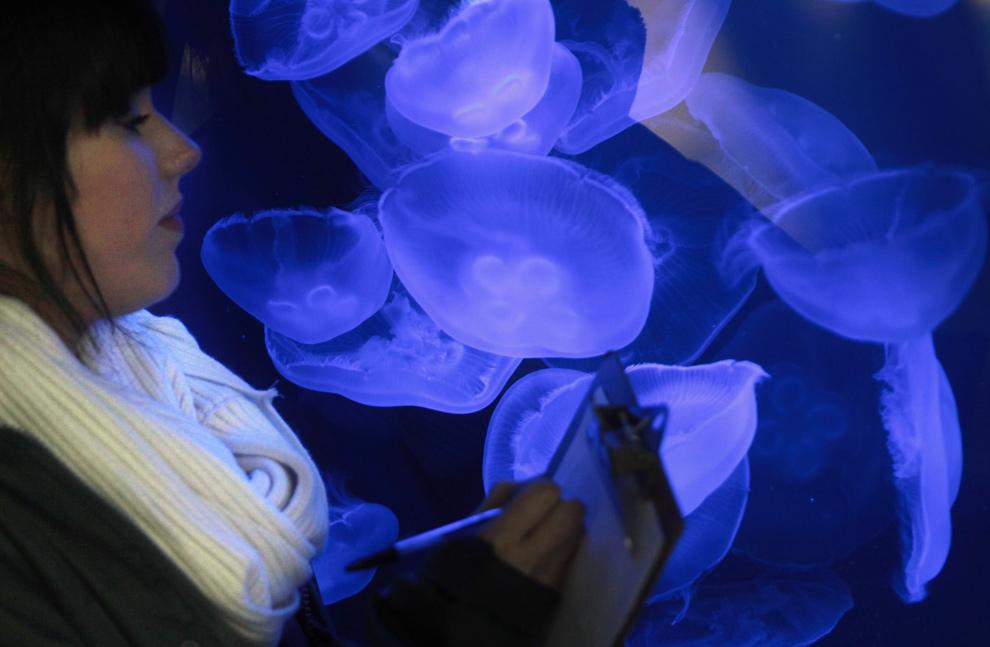 17. Сотрудница зоопарка переписывает число морских медуз в их аквариуме в Лондонском зоопарке во время ежегодной переписи животных 5 января 2010 года. В Лондонском зоопарке живет более 650 различных видов, которых необходимо занести в каталог, что требует лицензия зоопарка. (Dan Kitwood/Getty Images)