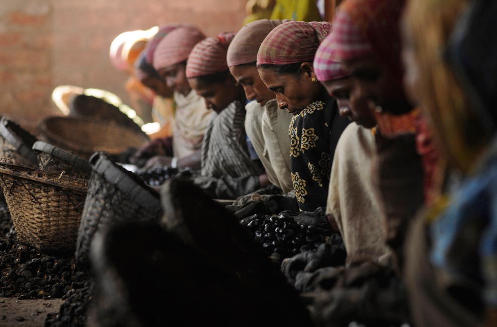 21. Женщины работают на заводе по переработке орехов кешью в Гакулнагаре на окраине Агарталы, Индия, 7 января 2010 года. (REUTERS/Jayanta Dey)