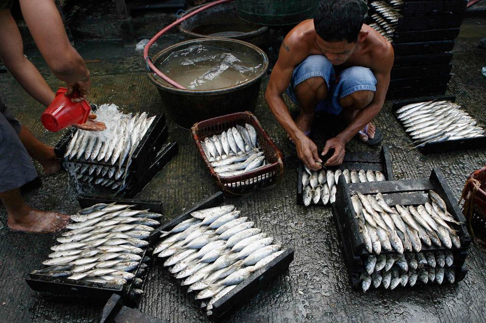 23. Рабочие чистят рыбу на людной улице в Маниле 11 января 2010 года прежде чем поместить ее в духовку. Торговец продает копченую рыбу по 80 песо (1,77 долларов) за килограмм. (REUTERS/Romeo Ranoco)