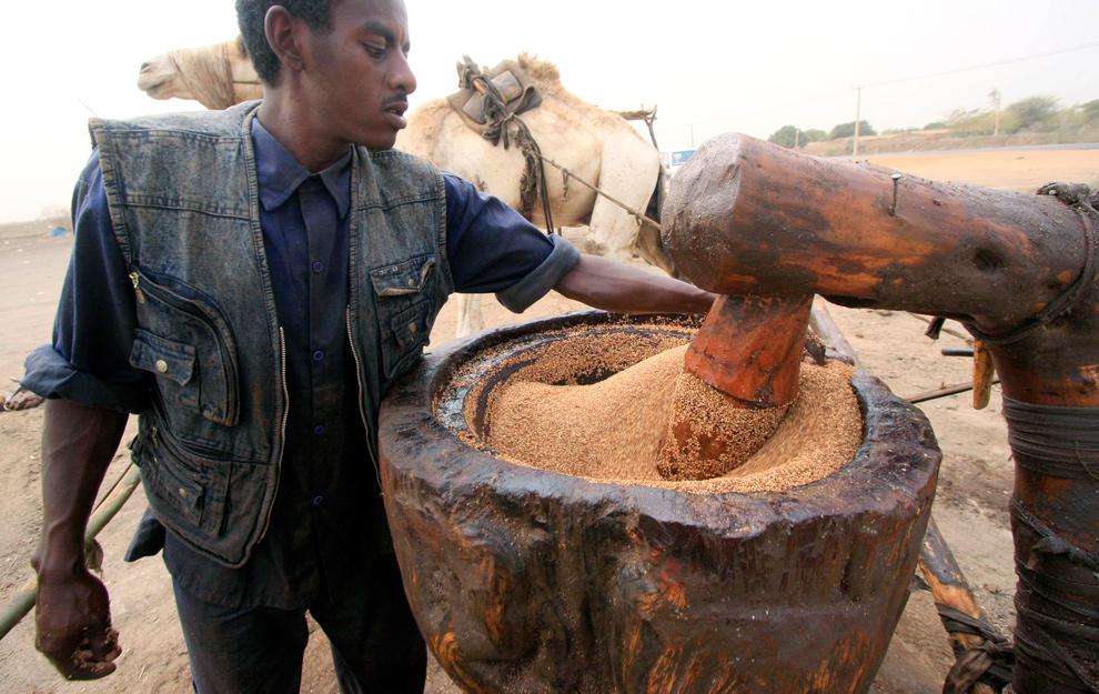 27. Рабочий из Судана использует верблюда, чтобы запустить традиционный пресс для производства кунжутного масла в деревне Кхоялааб недалеко от столицы Кхартум 19 января 2010 года. (REUTERS/Mohamed Nureldin Abdallah)