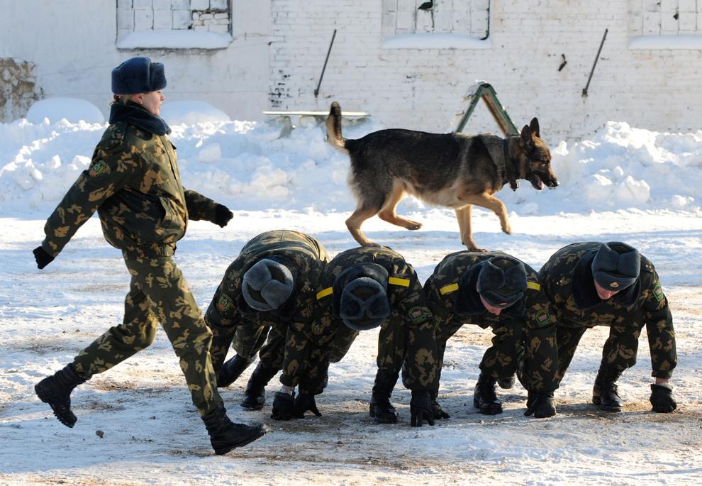 32. Пограничная собака бежит по спинам солдат в белорусском городе Сморгон, который расположен в 130 км к северо-западу от Минска. Снимок сделан 22 января 2010 года на территории полигона по обучению военных собак. (VIKTOR DRACHEV/AFP/Getty Images)