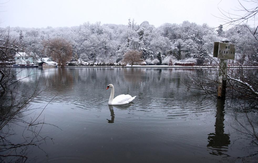 4. Лебедь плывет по реке Темзе мимо зимнего пейзажа 6 января в Хенли-он-Темза. Метеослужба вынесла предупреждение о морозе и снегопаде, захватившем южные округа от Шотландии и север Англии. Метеорологи сообщают, что это самый сильный снегопад в Великобритании за последние 23 года, в некоторых районах Англии выпало до 40 см снега. (Getty Images / Oli Scarff)