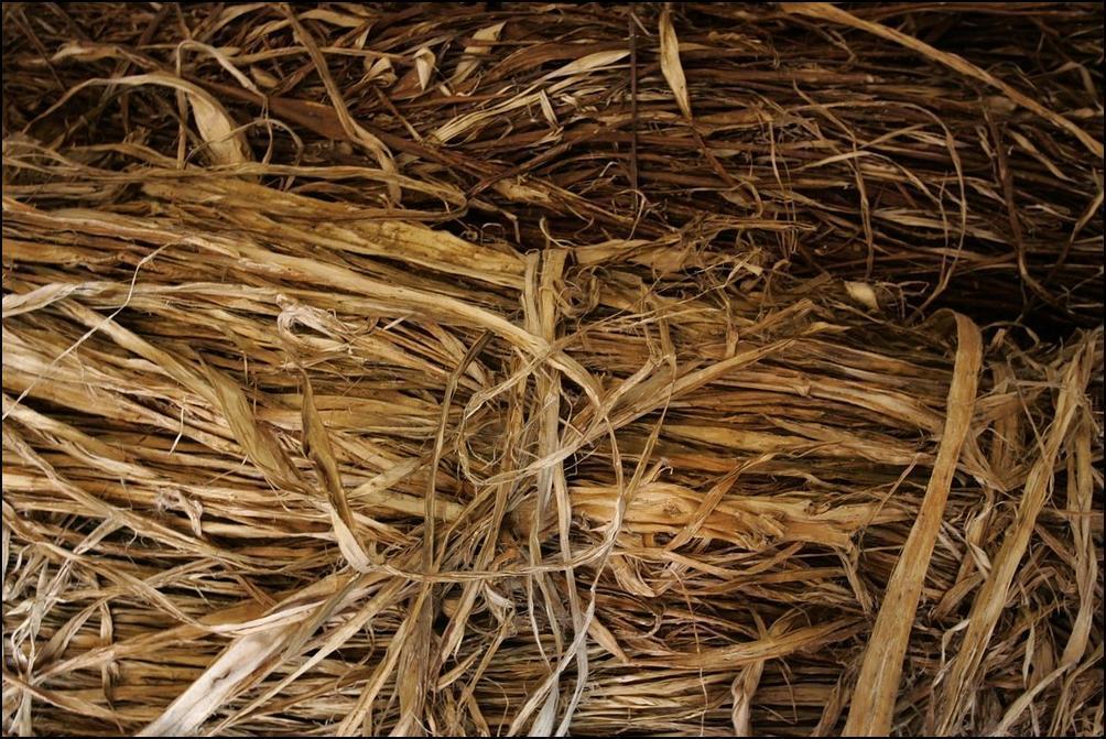 2) Материал для бумаги - тутовое дерево. (Getty Images/Chung Sung Jun)